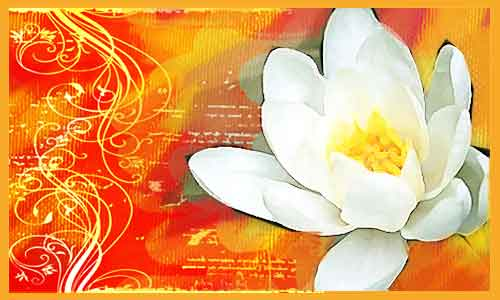 lotus-flower-with-border