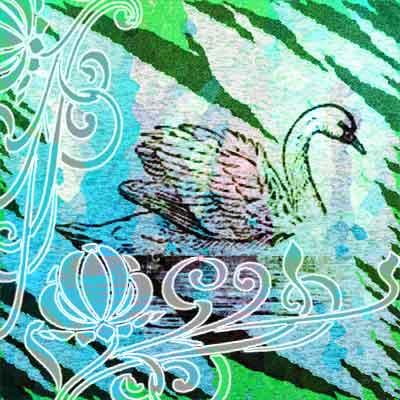 bird-copy2